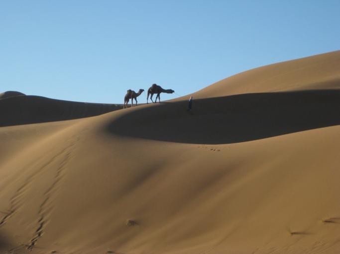 deuc dromaderes dans le desert du dra du voyage au maroc