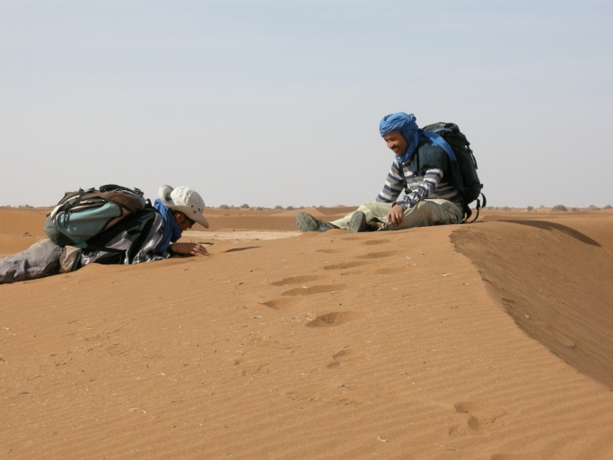 desert bivouac du voyage au maroc