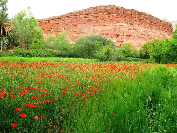 paysage vallee des roses du voyage au maroc