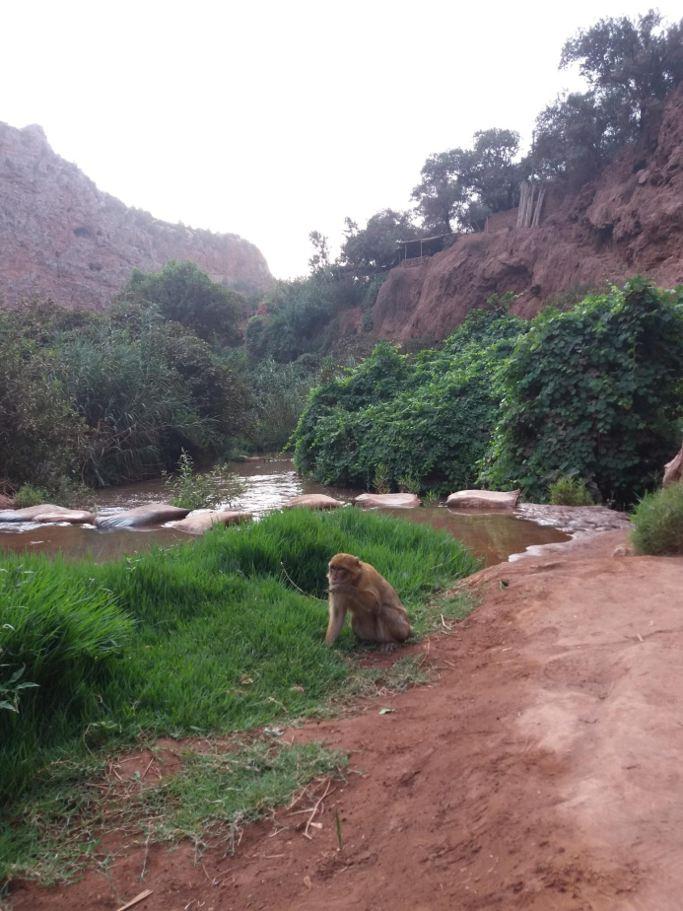 paysage excursion cascade ouzoud du voyage au maroc